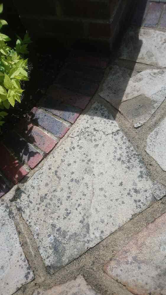 Lichen Mark Removal Ultra Power Cleaning